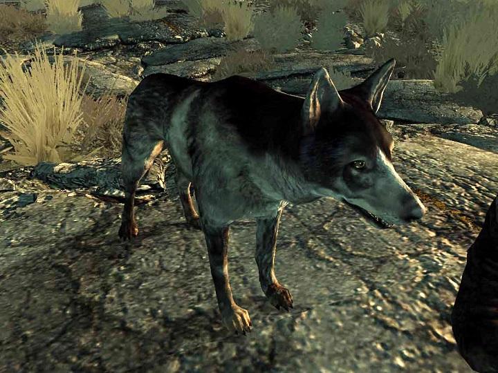 fallout-3-broken-steel-dogmeat