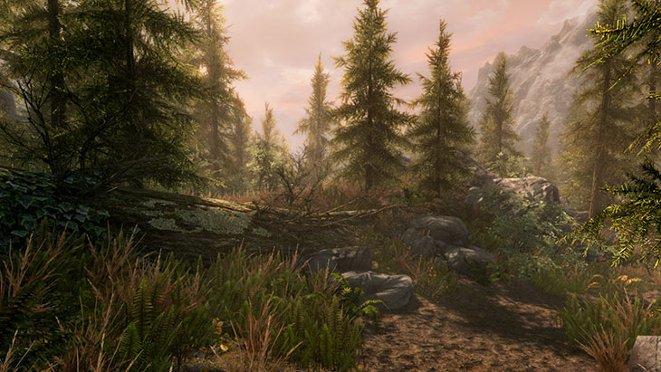 skyrim-special-edition-forest